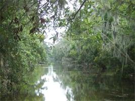 swamptales1