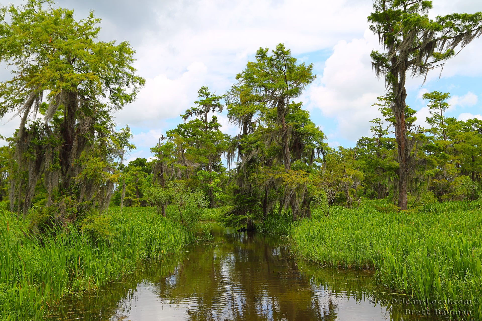 Swamp Tours Louisiana Houma