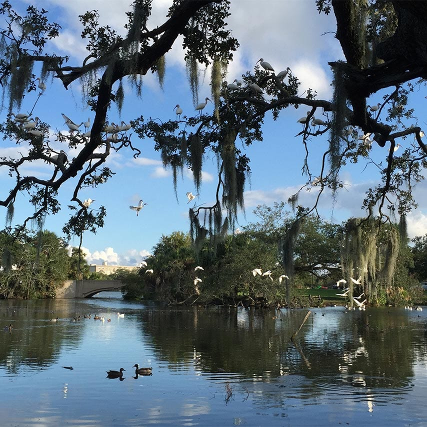 New Orleans City Park - Louisiana Tour Company