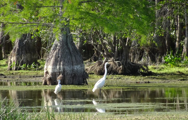Swamp Tour New Orleans >> When Is The Best Time For A Swamp Tour New Orleans Swamp